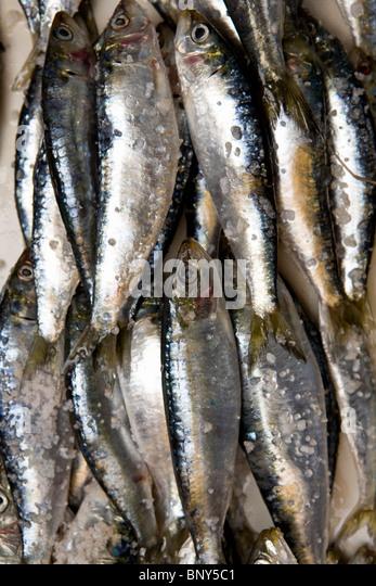 Frisch gefischt Sardinen in einem Marktstand, Essaouira, Marokko Stockbild