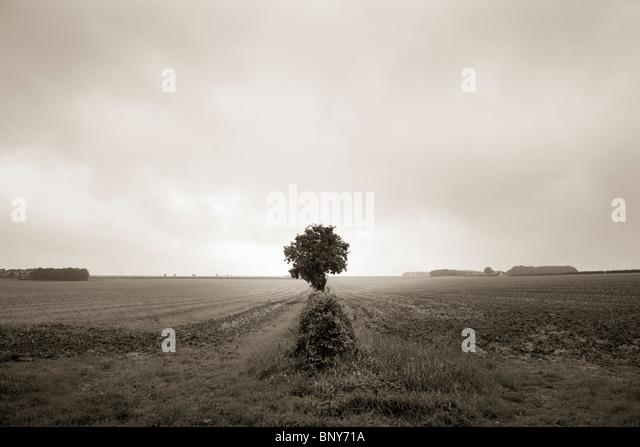 Einsamer Baum im Freiland Stockbild