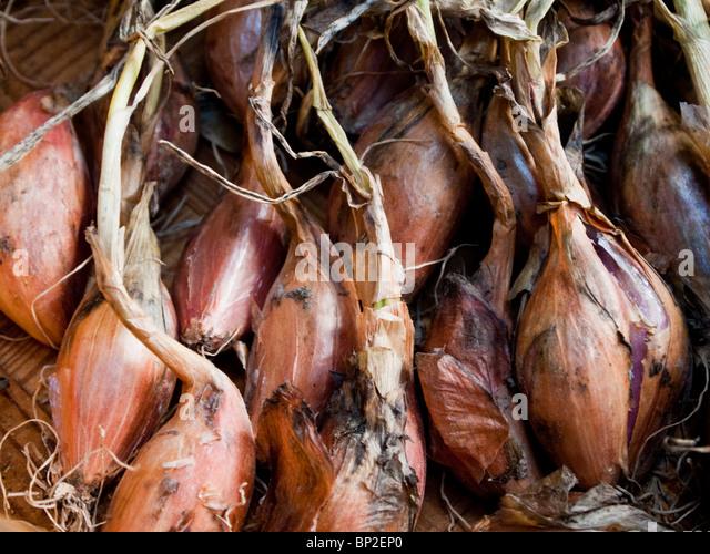 Nach Hause angebauten Schalotten abtrocknen in Korb Stockbild