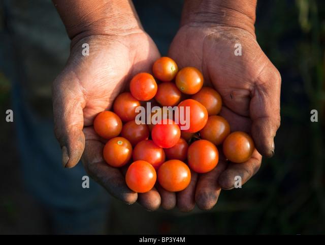 Hände halten frisches Gemüse Stockbild