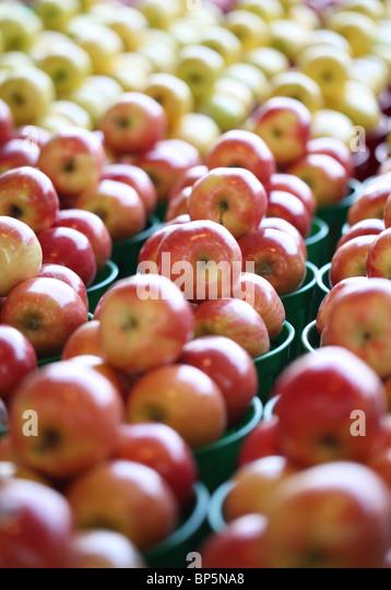 Eine Sammlung von Schalen mit frischem Bauern-Markt roten und gelben Äpfeln Stockbild