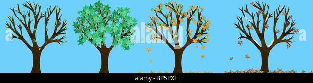 Bäume in den vier Jahreszeiten Stockbild