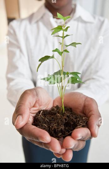 Jamaikanische Geschäftsfrau hält eine Pflanze Stockbild