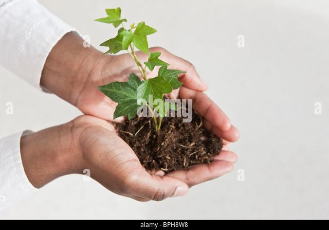 Nahaufnahme eines Weibes Hände halten eine Pflanze Stockbild