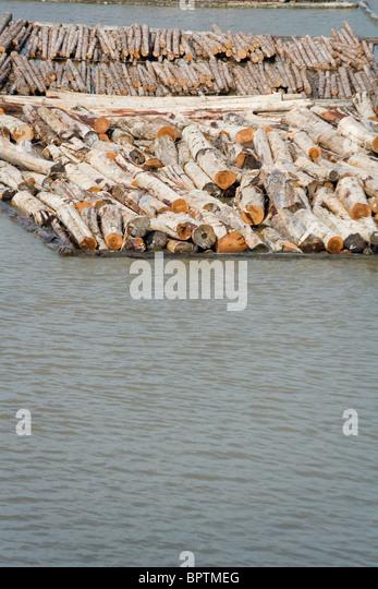 Log und Holz auf dem Wasser schwimmt Stockbild