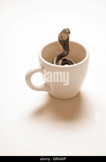 Kobra Schlange aufgewickelt in Kaffeetasse Stockbild
