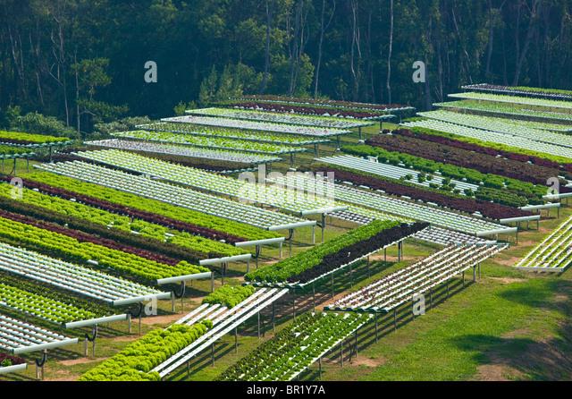 Australien, Queensland, Sunshine Coast, Pomona. Terrassenfeldern makrobiotischen Farm. Stockbild