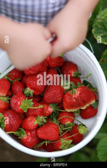 Kleines Mädchen hält Eimer voll mit Erdbeeren Stockbild
