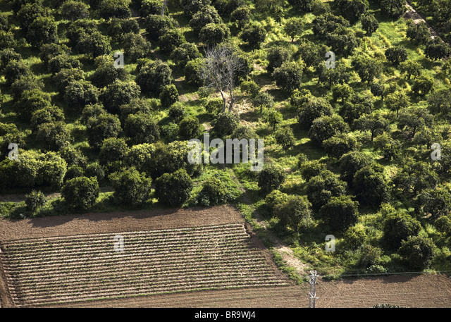 Olivenbäume im Flusstal Guadalete Stockbild