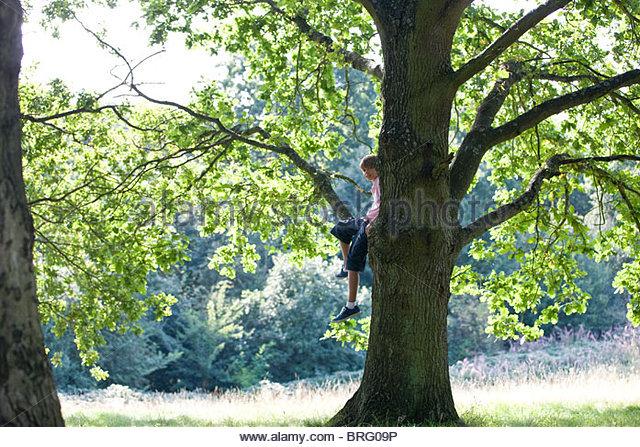 Ein kleiner Junge sitzt in einem Baum Stockbild
