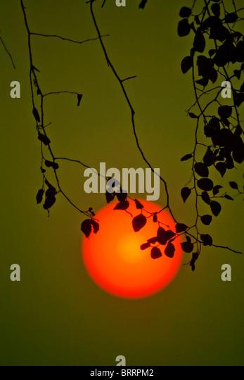 Eine große Orange-rote Sonne hängt in einer dichten Atmosphäre kurz vor Sonnenuntergang. Stockbild