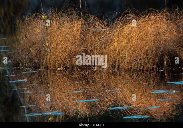 Grass und Reflexionen an der See Botnertjernet am Larkollen in Rygge, Norwegen. Stockbild