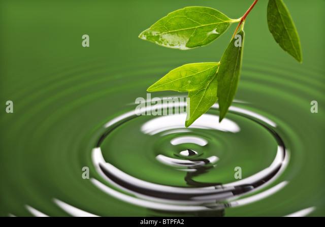 Grünes Blatt mit Wasser Ripple Stockbild