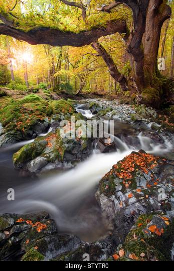 Tollymore Waldpark, Nordirland. Stockbild