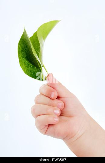 Konzeptbild der kindlichen Hand mit frischen grünen Blättern auf weißem Hintergrund Stockbild