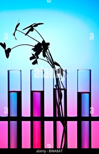 Blumen und Pflanzen im Reagenzglas vor einem farbigen Hintergrund Stockbild