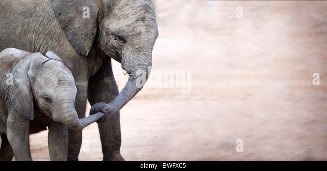 Mutter mit Baby-Elefant (Loxodonta Africana), Krüger-Nationalpark, Provinz Mpumalanga, Südafrika Stockbild