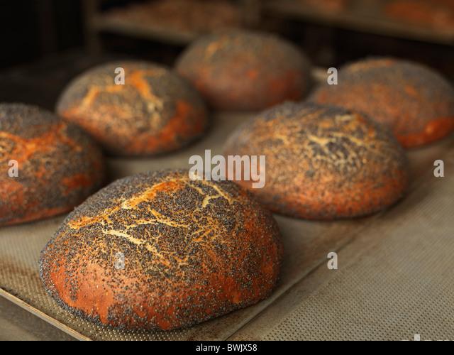Mehrere gebackene frisch Runde Brot Brote auf einem Backblech Stockbild