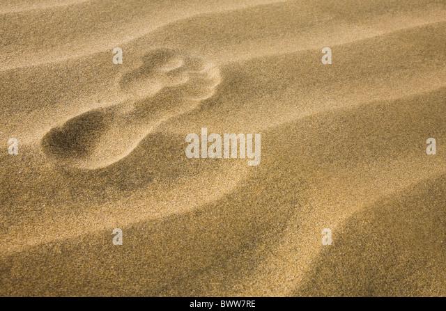Eine einzelne Präsenz in der goldenen Sandwüste Stockbild