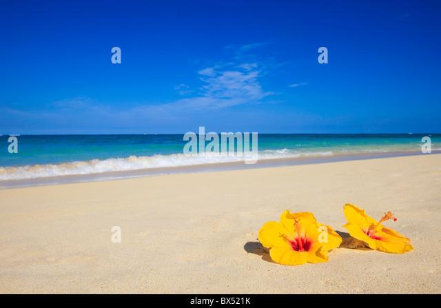 zwei gelbe Hibiskus liegen auf dem Sand von Hawaii Strand am Meer Stockbild