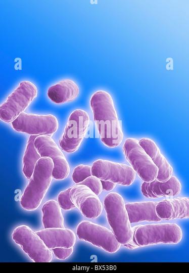 Stab förmige Bacillus-Bakterien Stockbild