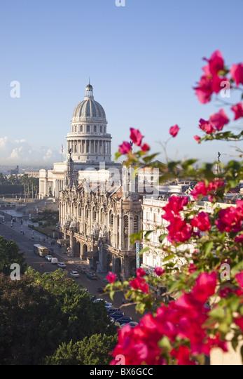 Bougainvillea Blumen vor dem Capitolio, Gebäude, Havanna, Kuba, Karibik, Mittelamerika Stockbild