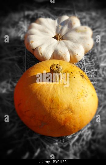 Bauernherbst-Kürbisse-Anzeige- Stockbild