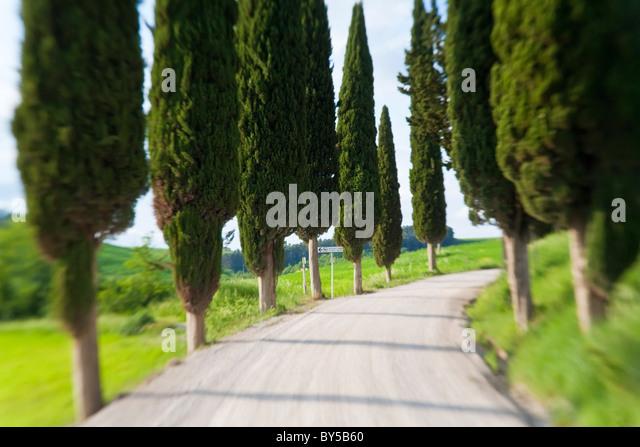 Kurvenreiche Straße, nr Pienza, Toskana, Italien Stockbild