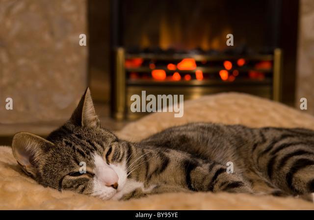 Katze-Schlafsack von Feuer einzelne Erwachsene weibliche Moggy Katze im Haus Stockbild
