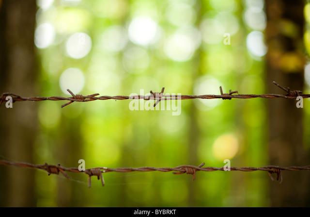 Nahaufnahme von rostigen Stacheldraht auf grünem Hintergrund Stockbild