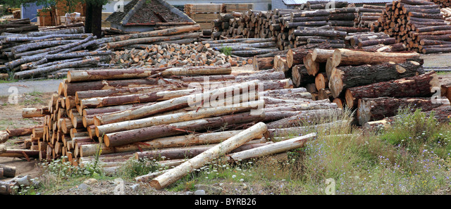 Protokolle Holz Industrie Stämme gestapelt Outdoor-Lager Stockbild