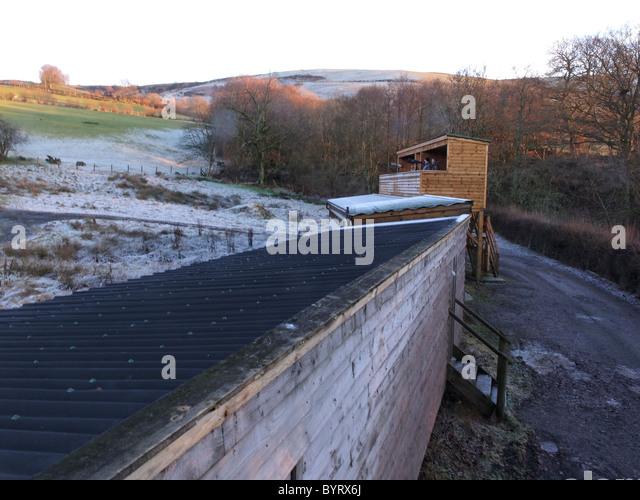 Versteckt auf der Gigrin Farm, Rotmilan Futterstation in mid-Wales, Januar 2011 Stockbild