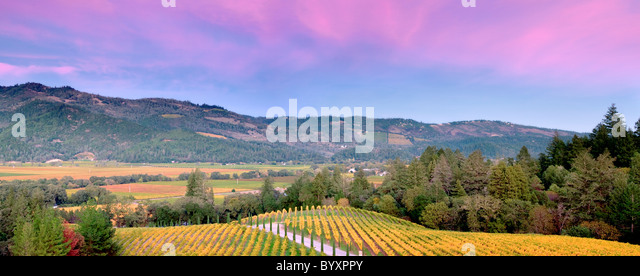 Sonnenuntergang mit Herbst farbige Weinberge im Castello di Amorosa. Napa Valley, Kalifornien. Eigenschaft relased Stockbild