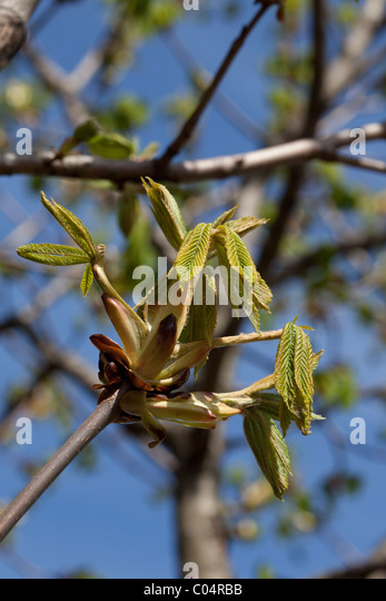 Neues Frühjahr Wachstum Stockbild