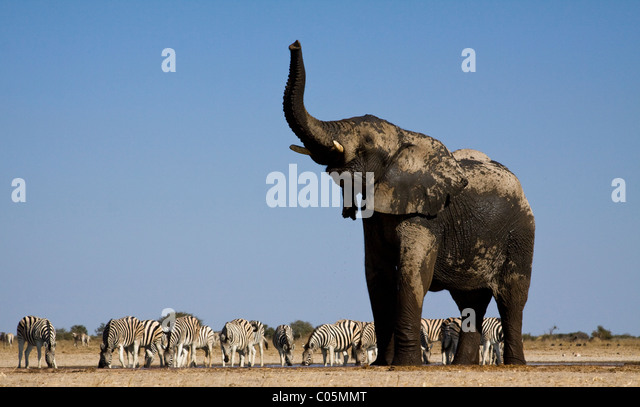 Elefanten und Zebras am Wasserloch, Etosha Nationalpark, Namibia Stockbild