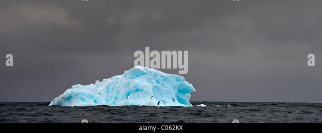 Adelie-Pinguine (Pygoscelis Adeliae) auf blauen Eisberg. Graham Passage, antarktische Halbinsel, Antarktis. Stockbild