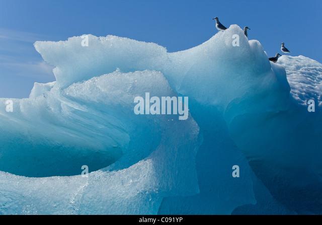 Nahaufnahme von einem Eisberg in Stephens Passage mit Möwen thront an der Spitze, Inside Passage, südöstlichen Stockbild