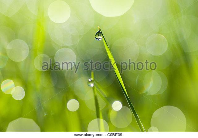 Nahaufnahme von einem Tautropfen auf einem Grashalm. Stockbild