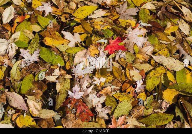 Auf Teich schwimmende Blätter im Herbst Stockbild