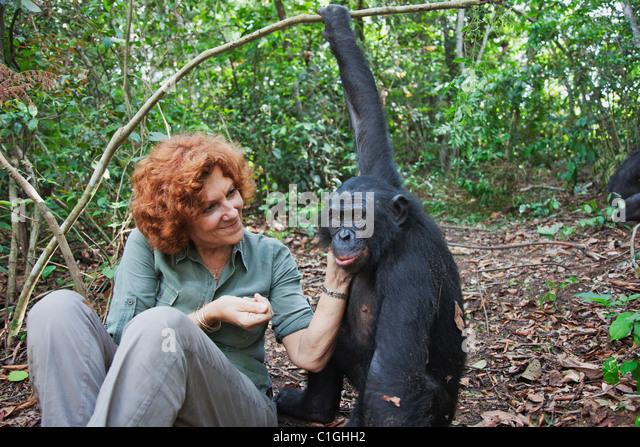 Claudine André mit Bonobos. Gründer des Heiligtums Lola Ya Bonobo-Schimpansen demokratische Republik Kongo Stockbild