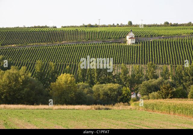 Deutschland, Bayern, Michelau Im Steigerwald, Weinberg auf einem steilen Hügel Stockbild