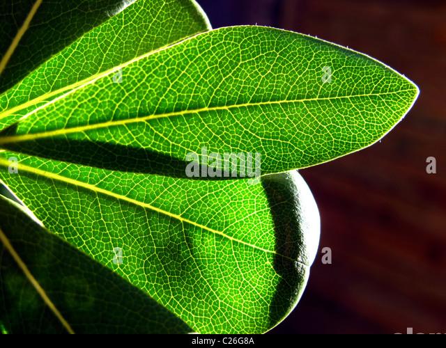 Einige grüne Blätter auf Fonds braun Stockbild