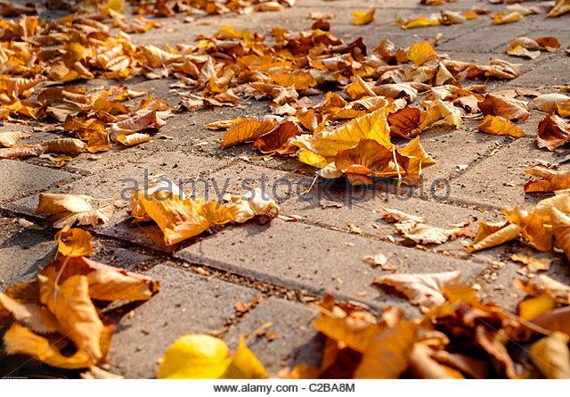 Im Herbst Laub auf dem Boden Stockbild