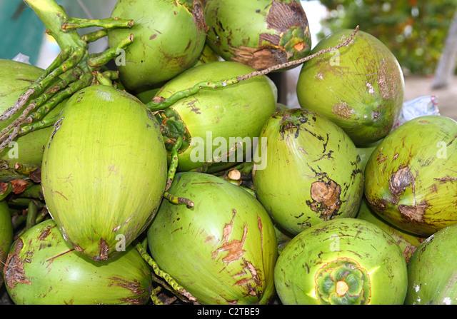 Kokosnüsse Früchte zur Herstellung von Saft Wasser Erfrischung gestapelt Stockbild