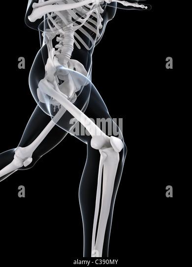 Skelett ausgeführt Stockbild
