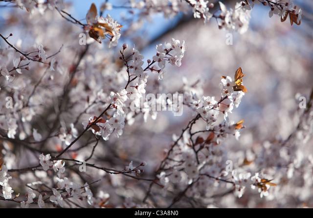 Frühling Blüten England UK Stockbild