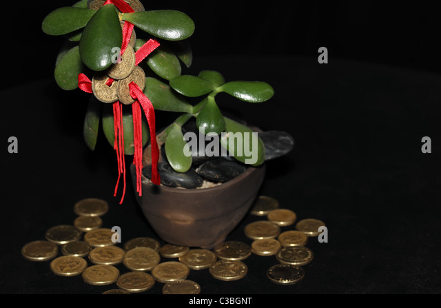 bonsai bank stockfotos bonsai bank bilder alamy. Black Bedroom Furniture Sets. Home Design Ideas
