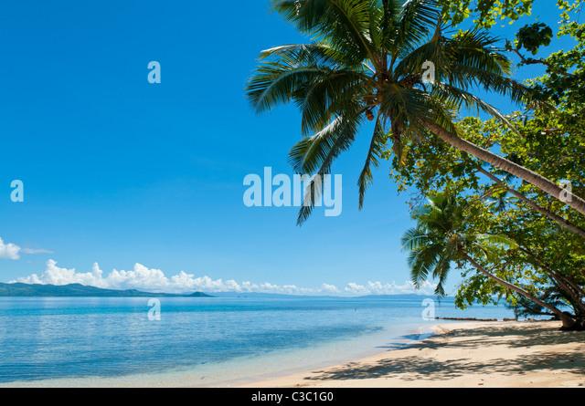 Strand und Cocopalm Bäume im Matangi Private Island Resort, Fidschi. Stockbild