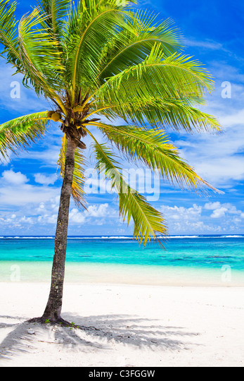 Einzige Palme mit Blick auf erstaunliche blaue Lagune Stockbild