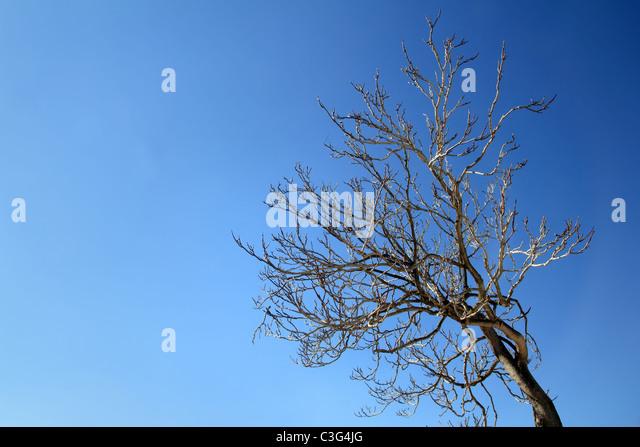Herbst-Winter Baum verzweigt sich in blauer Himmel Tag Stockbild